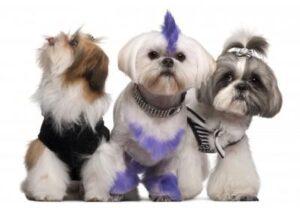 comparativa mejores cortapelos para perro