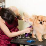 ¿Cuál es la mejor marca de cortapelos para perros Oster o Andis?