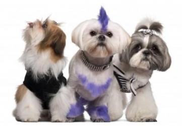 Comparativa mejores cortapelos para perros